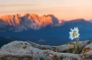 a flower blooming on top of a mountain
