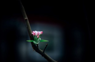 a small flower growing out of a branch.