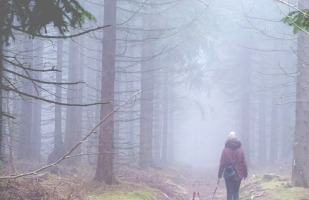 a woman walking with her dog in foggy woods.