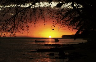 Sunset on a rocky shore underneath an overhanging tree